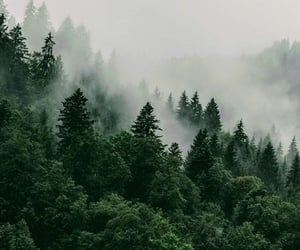 fog, forest, and background image