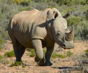 animals, rhinoceros, and rhino image