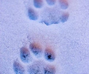 paws, snow, and winter image