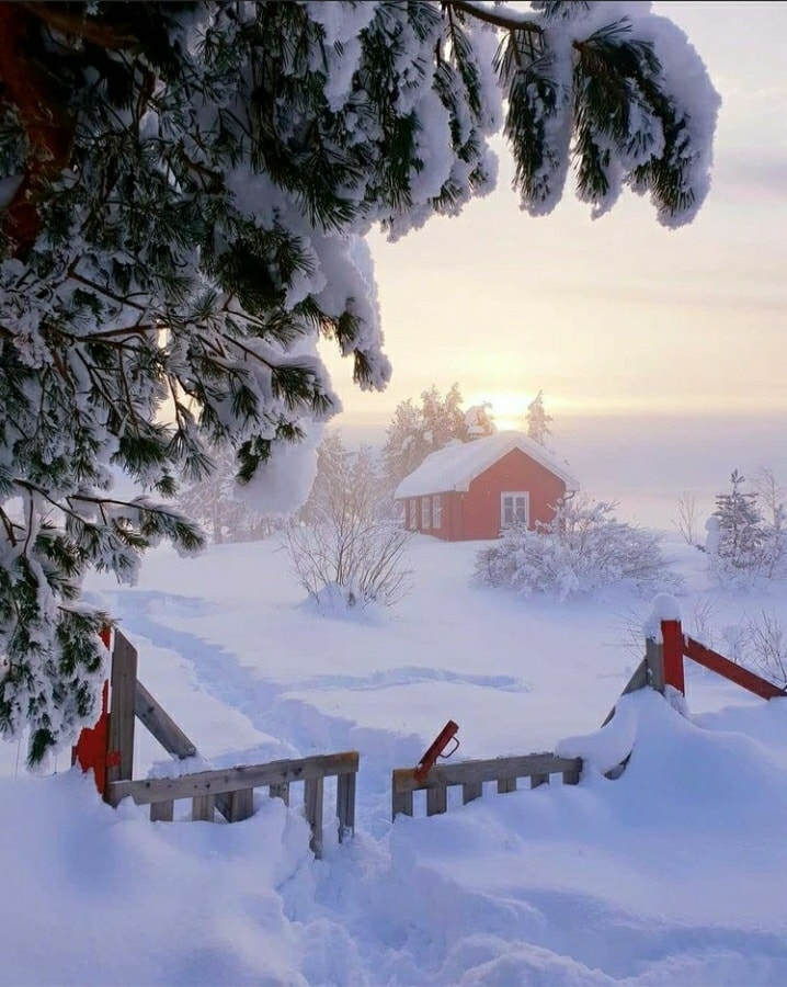 christmas, scent, and winter image