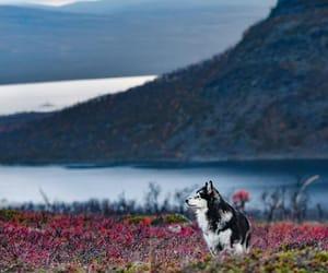 autumn, finland, and lapland image