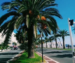 france, nice, and palmtrees image