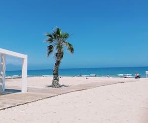 beach, summer, and palmtree image