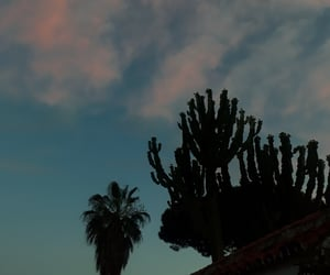aesthetic, palmtree, and plants image