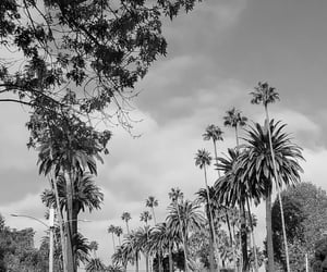 palmtrees and beverlyhills image