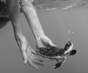black and white, hands, and turtle image
