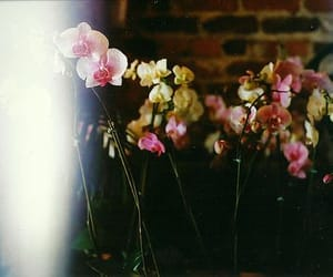 light, flowers, and vintage image