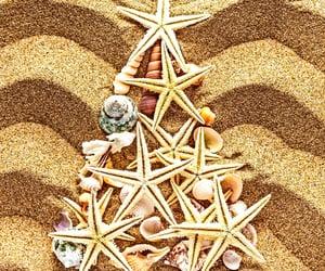 seashore, starfish, and beaches image