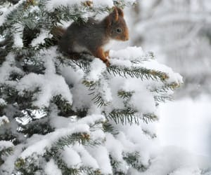 winter, snow, and squirrel image