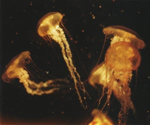 jellyfish and indie image
