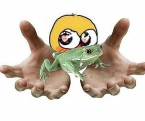 frog, meme, and cute image