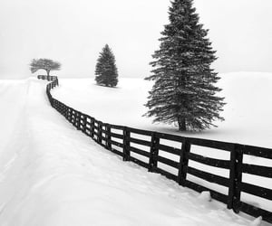 cold, christmas, and nature image