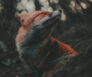 aesthetic, fox, and pinterest image