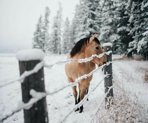horse, animals, and winter image