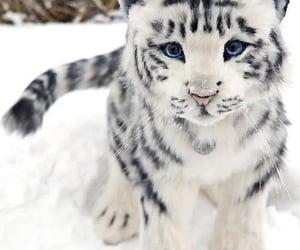 animal, cat, and snow image