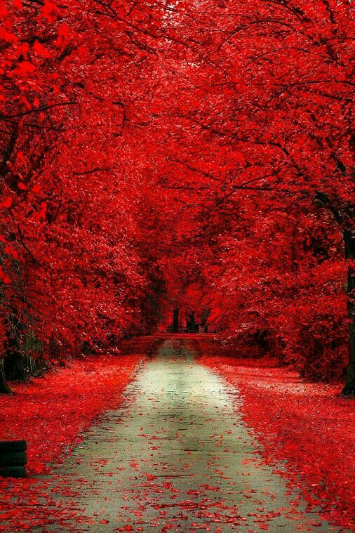 red and nature image