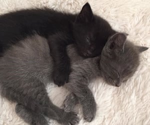 cats, discord, and pfp image