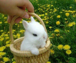 bunny, flowers, and animal image