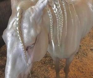 horse, animal, and braid image