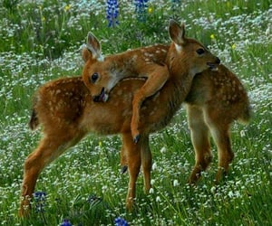 Animales, naturaleza, and bosque image