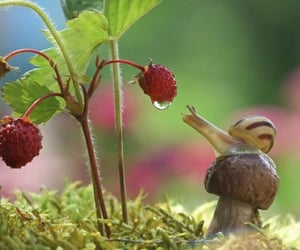 fungus, raspberry, and life image