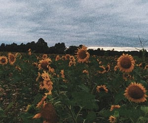 shattered, life, and sunflower image