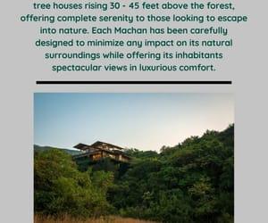 travel, treehouse, and honeymoon image