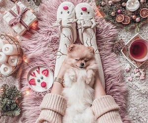 animal, cozy, and cutie image