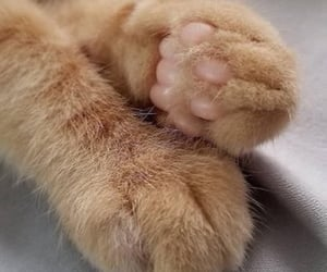 angle, cat paws, and feline image