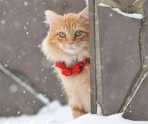 cat, snow, and christmas image