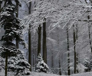 landscape, snow, and snowy image