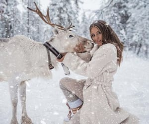 holidays, reindeer, and snow image