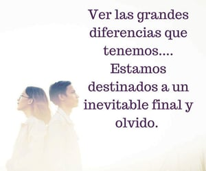 amor, frases, and olvido image