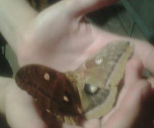 butterfly, moth, and aesthetic image
