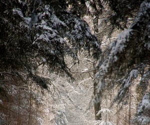 aesthetic, snow, and winter image
