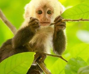 animals, costa rica, and fauna image