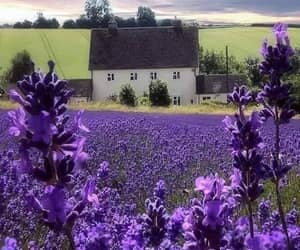 cottage, architecture, and country living image