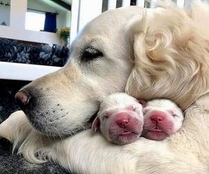 Animales, perro, and ternura image