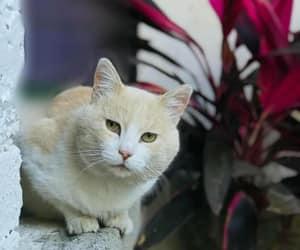 animal, mascota, and felino image