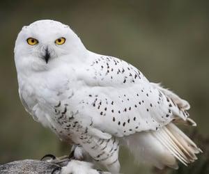bird, owl, and owls image
