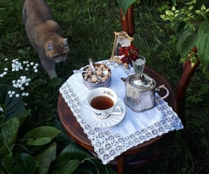 aesthetic, cat, and tea image