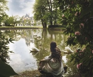photography, Swan, and beauty image