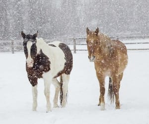 animals, christmas, and december image