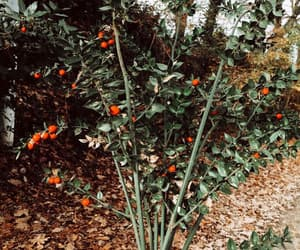 diy, flowers, and çiçek image