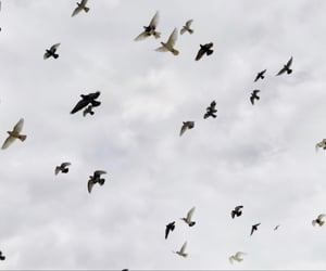 birds, black and white, and Flying image