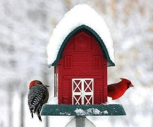 bird house, snow, and birds image
