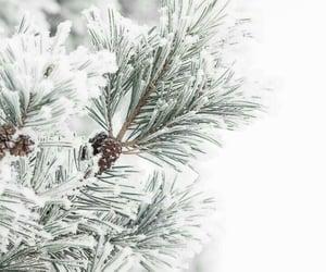 christmas, december, and pine image