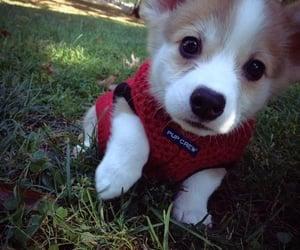 dog health image