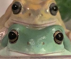 frog image
