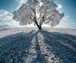 winter, cold, and nature image